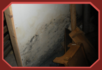 Mold in basement, Troy, NY home